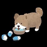 순지트 강아지.png