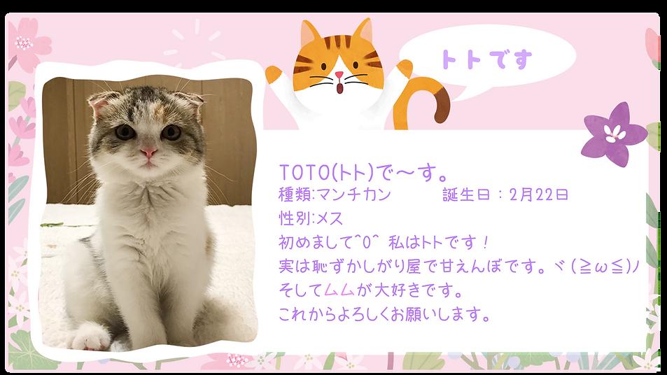 토토프로필 01.png