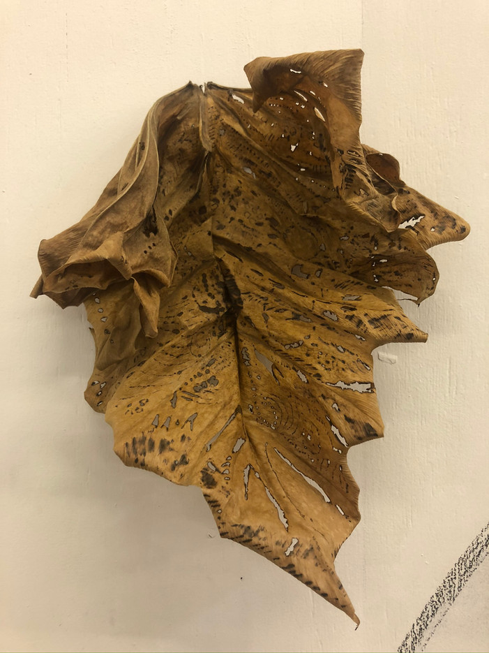 Folha II, pirografia sobre folha seca