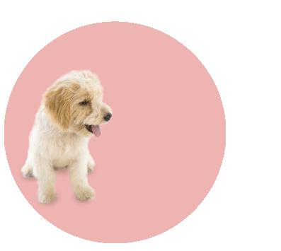 Proceso de Adopción de Animales