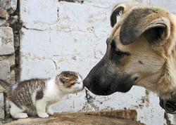Perros y Gatos de la calle