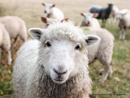 Shepherd ME or Shepherd YOU?