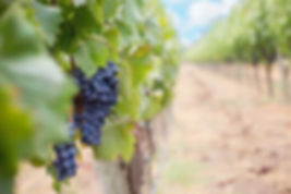 grapes-1952035_1920.jpg