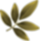 APDN_feuilles_JAUNE.png