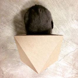 cat in small box