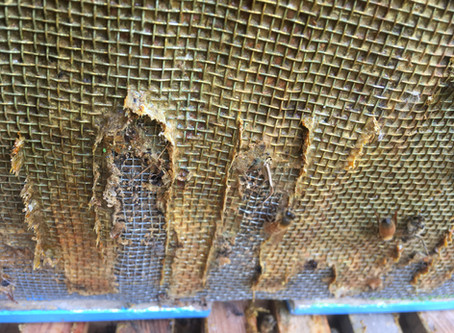 Propolis the ultimate gap filler and wall liner in bee colonies