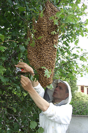 norbert-klose-organic-beekeeper