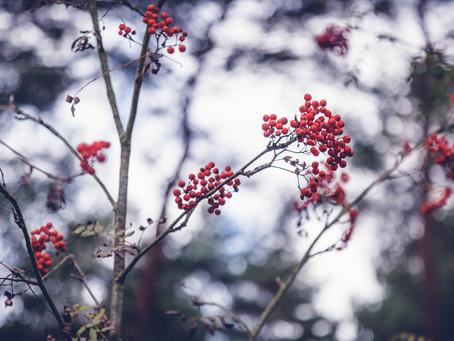 Rowan Tree Magical Properties