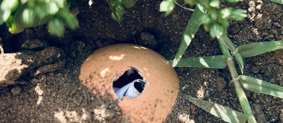 Eggshell Spell to Bury a Secret