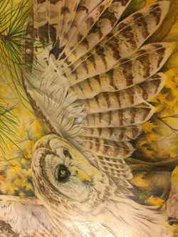 Owl State Fair close Up Owl