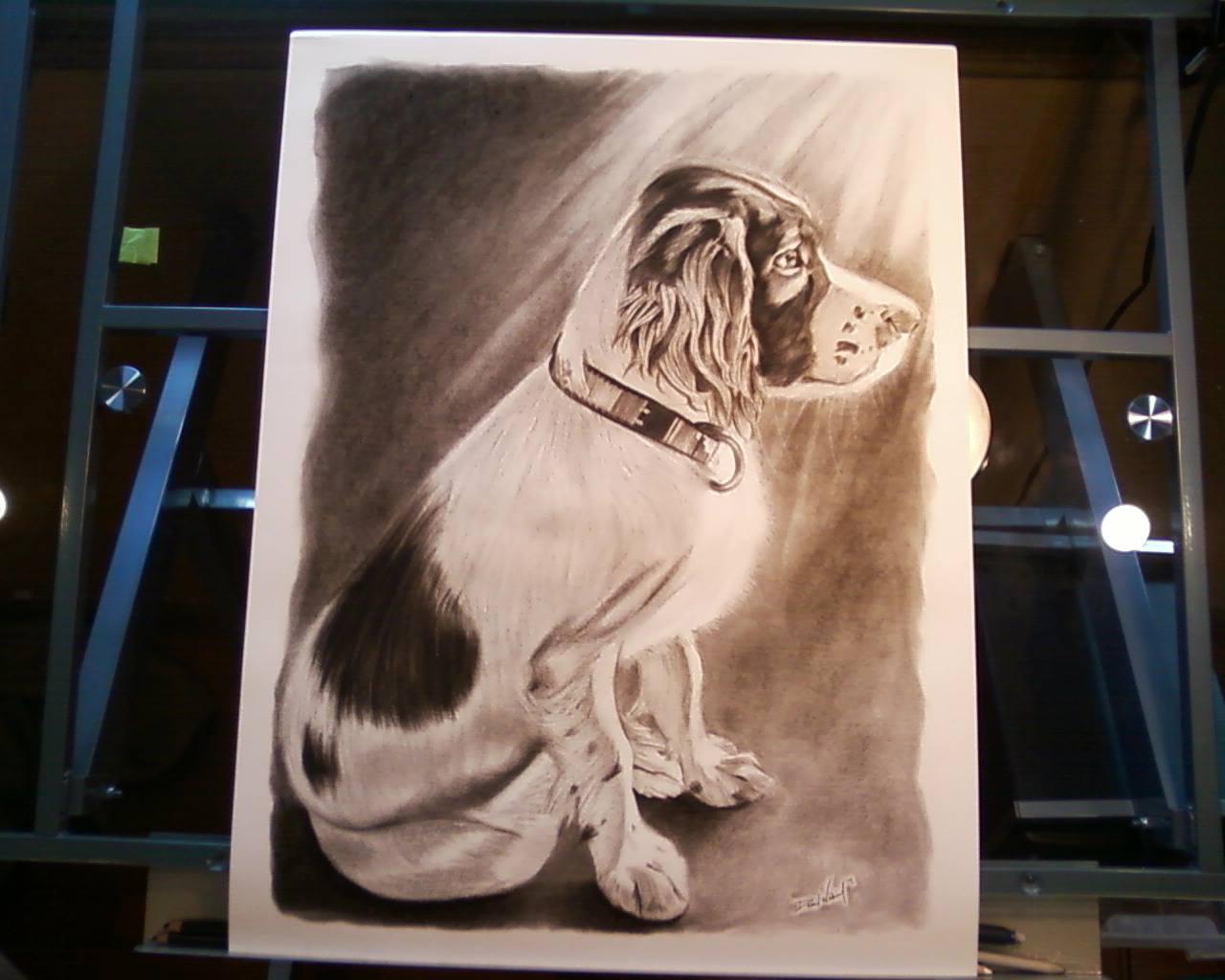Johns Dog