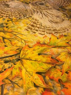 Owl State Fair Close up Leaf