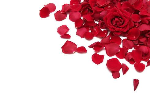 Rosenblüten.jpg