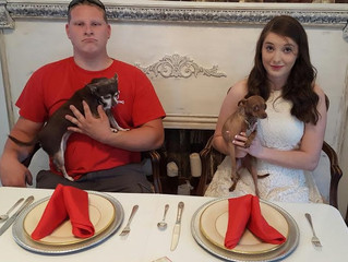 Well.......Those Royals & their dogs.  Really!
