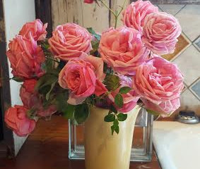 Roses from 2015 in 2016?!? Amazing!