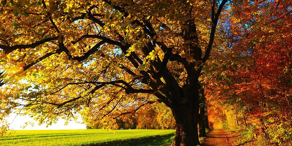 EcoSikh Canada 'Guru Nanak 550' Tree Planting Day - Brampton Location TBC