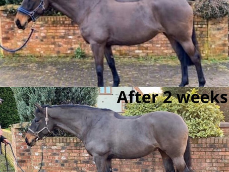 PharmaTRAC - The Total Digestive Support For Horses