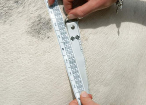 How to measure your horse's weight