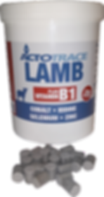 Actotrace_Lamb-removebg-preview.png