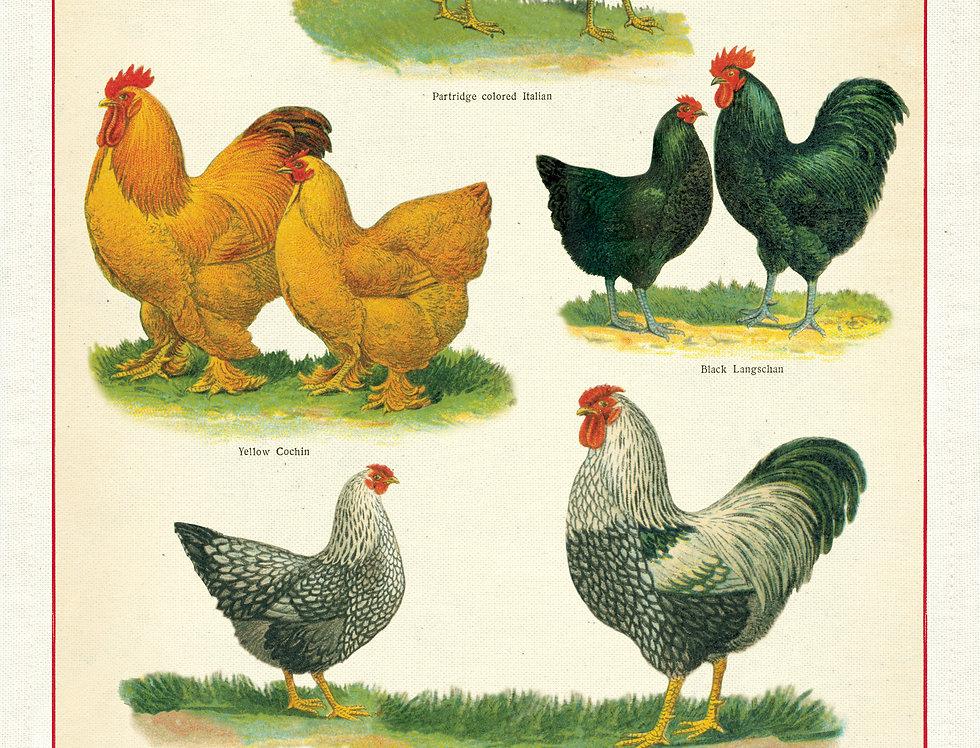 Cavallini Chickens & Roosters Tea Towel