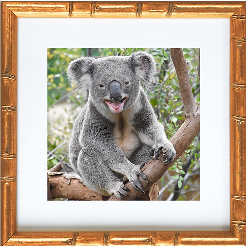 Framed Koala Bear Smiling