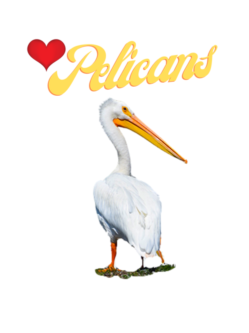 Note Cards Love Pelicans By Concetta Ellis