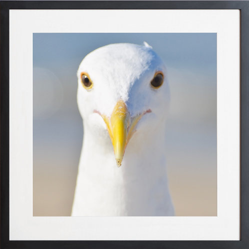 Framed Portrait Of A Seagull Photography By Concetta Ellis
