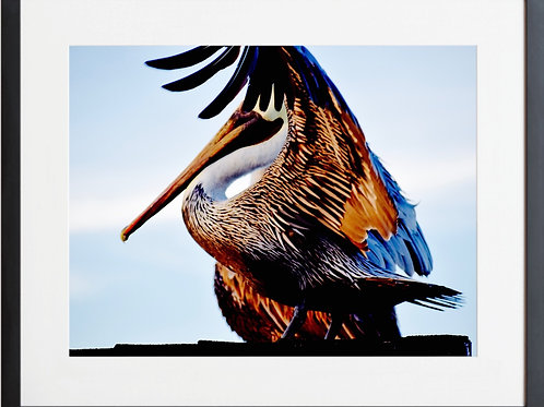 Framed Pelican 09 Colorful Feathers Photography By Concetta Ellis