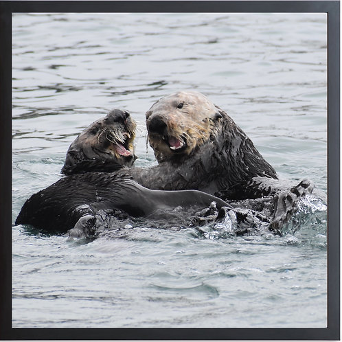 Framed Otters Mama And Her Pup Photography By Concetta Ellis