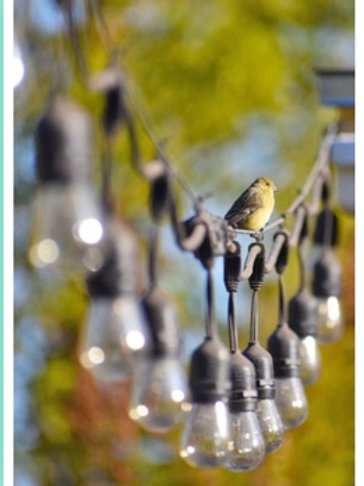 Note Card Bird Goldfinch & String Of Lights By Concetta Ellis
