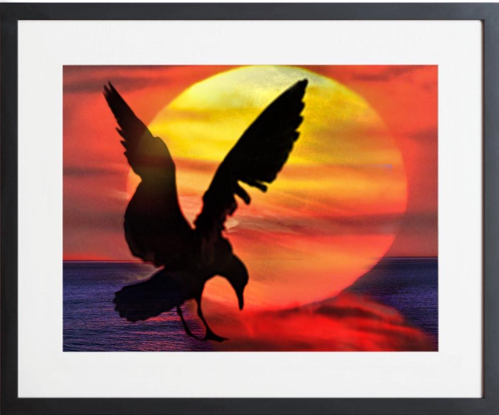 SUNRISE 13 SUNSET SEAGULL By Concetta Ellis