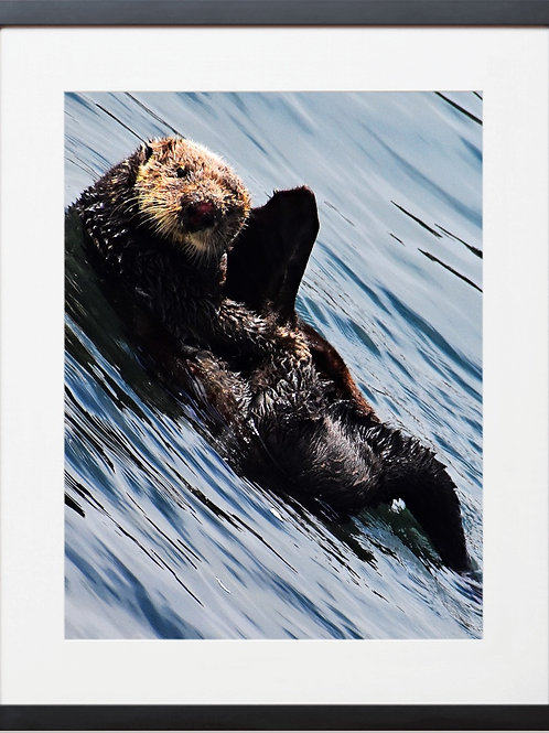 Framed Otter Waving Photography By Concetta Ellis