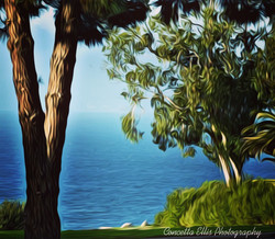 Ocean View Photography Art By Concetta E