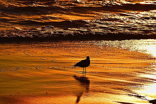 Note Card Bird 03 Sunset Photography By Concetta Ellis