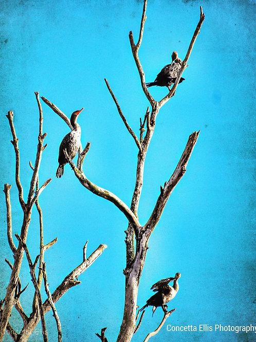 Note Cards Cormorant Birds In Tree Morro Bay