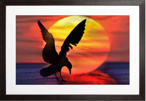SUNRISE 11 SUNSET SEAGULL By Concetta Ellis