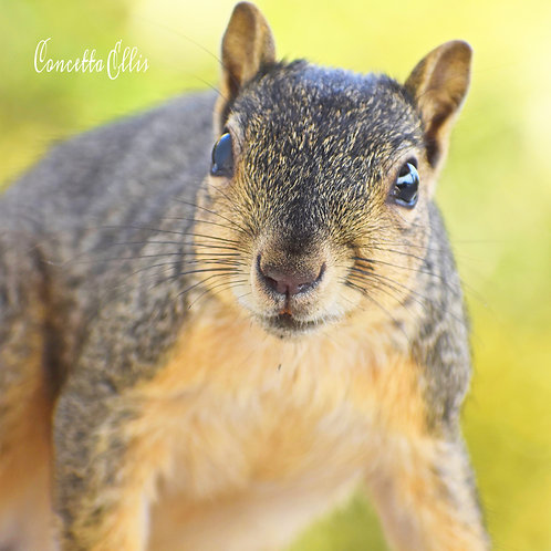"Square Note Card Squirrel ""I See You"" By Concetta Ellis"