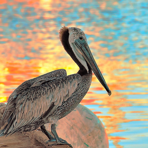 Note Card Pelican 04 Sunset San Pedro, CA  Photography By Concetta Ellis