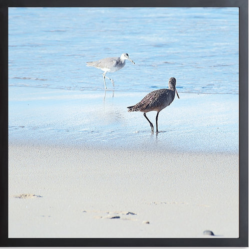 Framed Sandpipers On The Beach Photography By Concetta Ellis