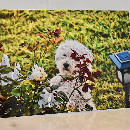 Note Card Dog Smelling The Roses Photography By Concetta Ellis
