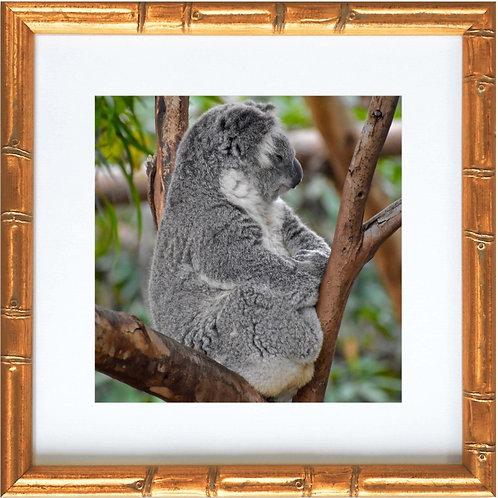 Framed Koala Bear 02 Sleeping