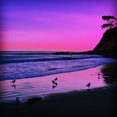 Note Card Purple Sunset 02 Birds Photography By Concetta Ellis