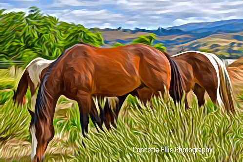 Note Card Horses Photography Art
