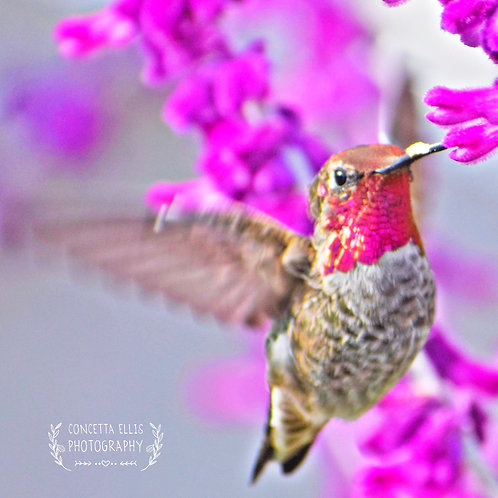 Note Cards Hummingbird #2