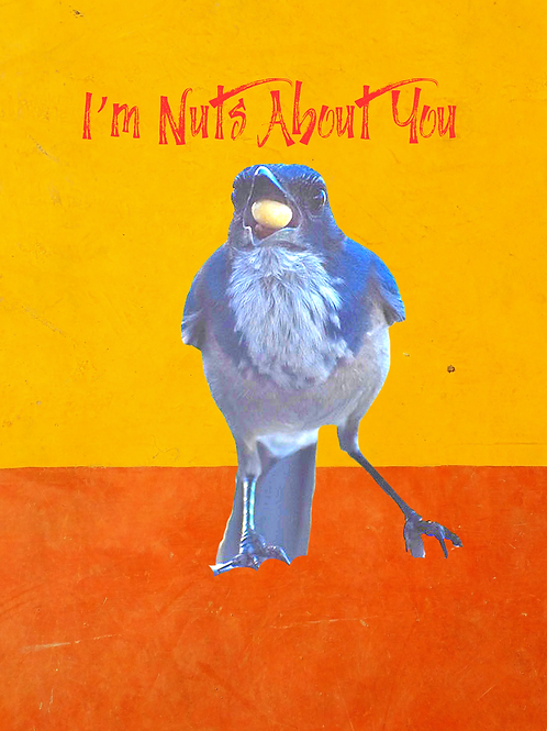 Note Cards (10ea) I'm Nuts About You By Concetta Ellis