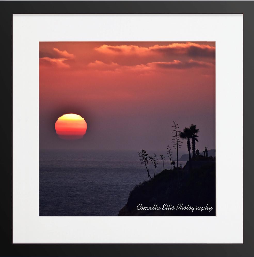 SUNSET 13 ROYAL PALMS