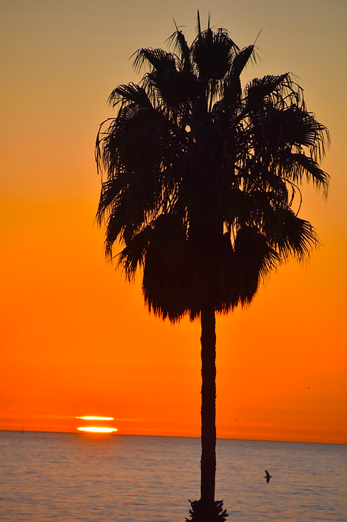 Note Cards Santa Monica Sunset Palm Tree By Concetta Ellis