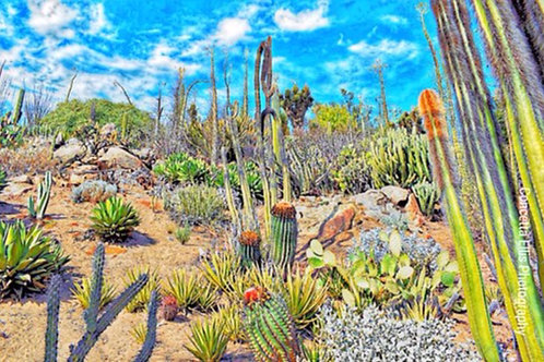 Note Card Cactus Landscape San Diego CA Photography By Concetta Ellis