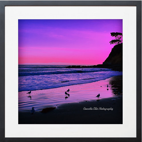 SUNSET PURPLE Framed Photography By Concetta Ellis