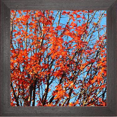 TREE 01 FALL Portlan Oregon